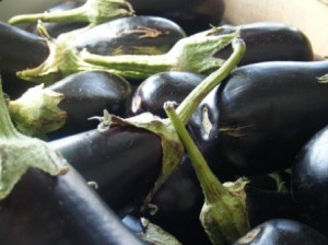 Eggplants in the sun