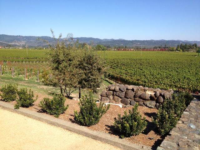 Flora Springs Vineyard